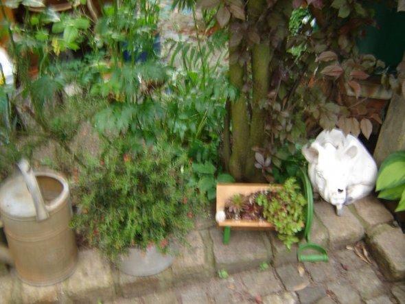 Garten 'minigarten'