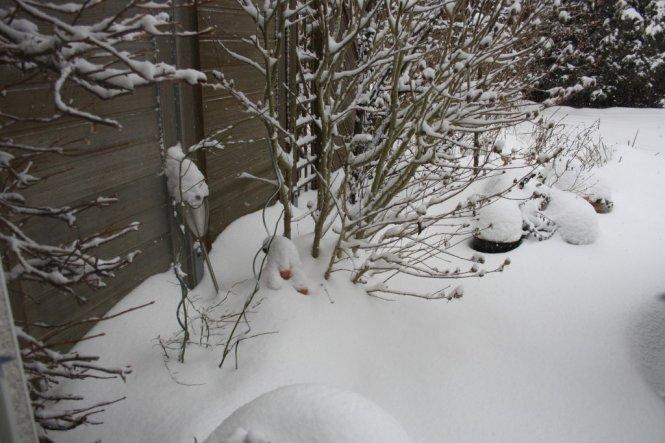 Garten 'Schneeimpressionen 2010/2011'