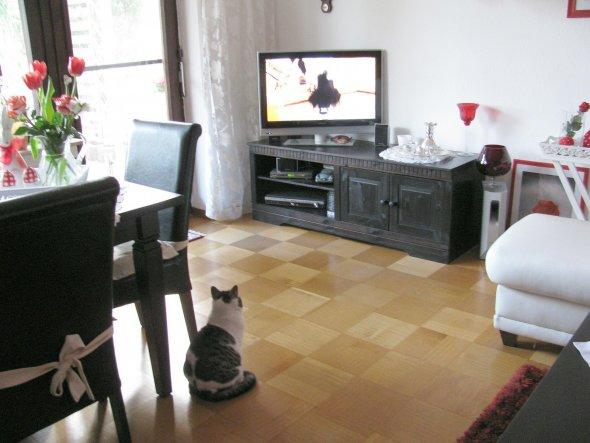 Seppi schaut Tiere suchen ein Zuhause
