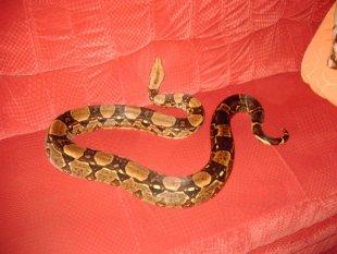 Haustiere 'Unsere Schlangen'