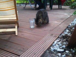 Der blinde Winnie