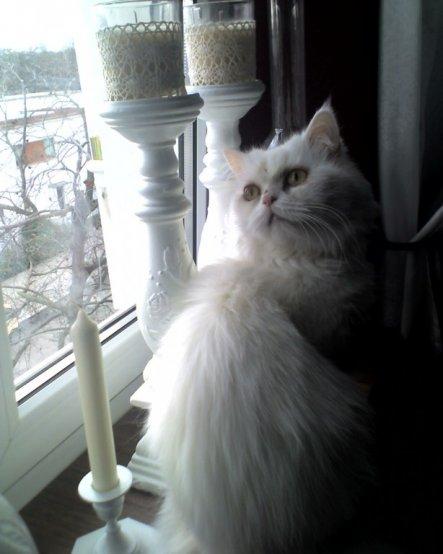 Mein Lieblingsfoto von Luna.