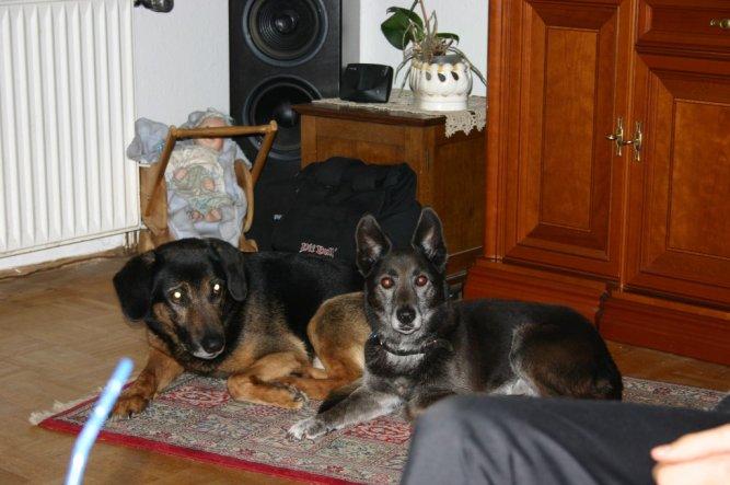 Haustiere 'Arko & Felix'