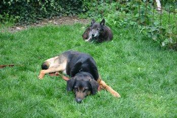 Arko & Felix