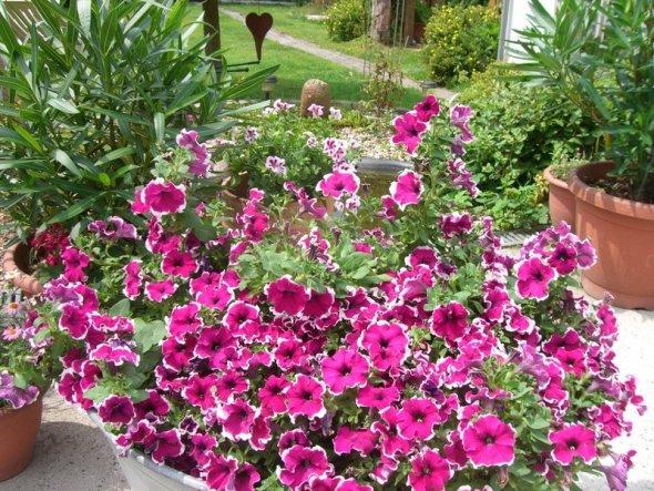 Garten 'Sommer  09'