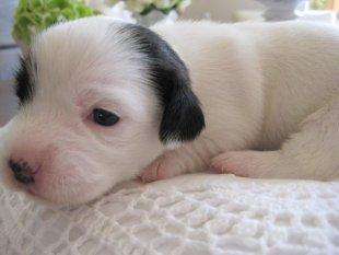 Lilli's Babies 13 Tage alt...