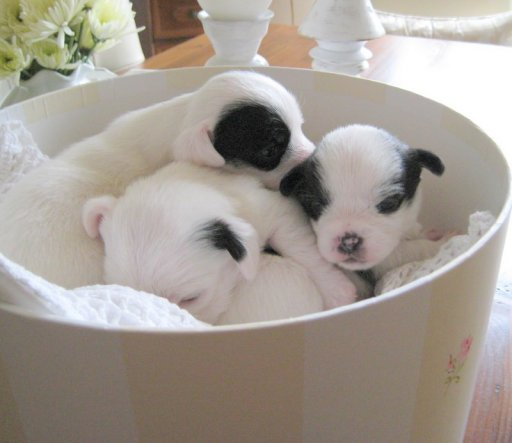 Haustiere 'Sonntagsgrüße :)))'