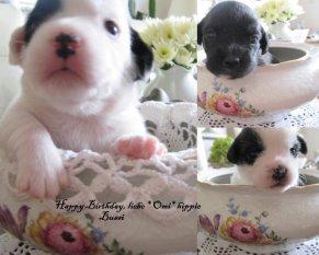 Haustiere 'Geburtstagsgrüße...'