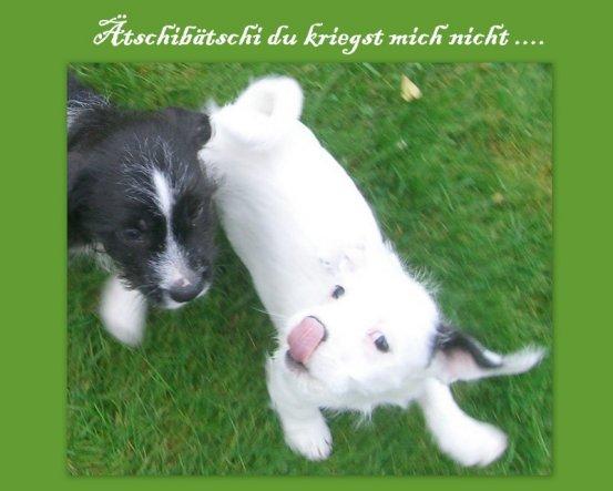 Haustiere 'Abschied & Neubeginn :)))'