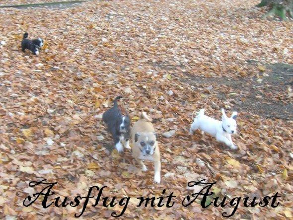 Haustiere 'August besucht.....'