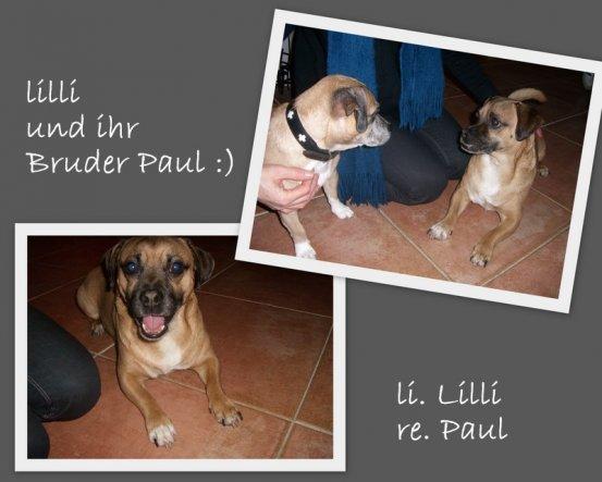09 Dezember  Unglaublich ... heute, nach fast sechs Jahren haben wir durch Zufall Lillis Bruder gefunden :)))  Ich kann es immer