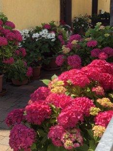 'Mein Garten' von engina