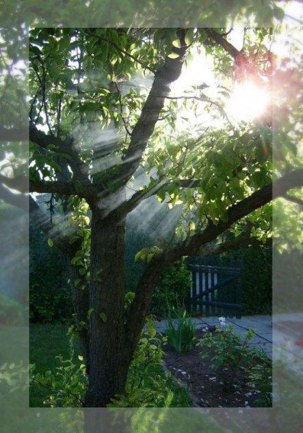 """Diese Foto in unserem Garten entstand übrigens, als der Rauch vom """"gelöschten"""" Grillfleisch in den Baum zog, und zufällig schien auch noch d"""