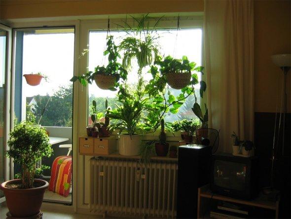 Wohnzimmer f nf in einem von madeleine 110 zimmerschau for Pflanzen in der wohnung