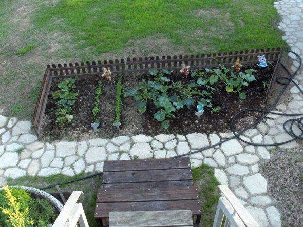 Hier meine ersten Versuche mit Zuccini und Erdbeeren.
