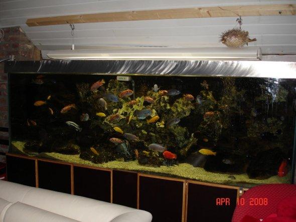 """unser """"kleines"""" Aquarium"""