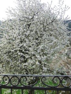 Frühling / Garten