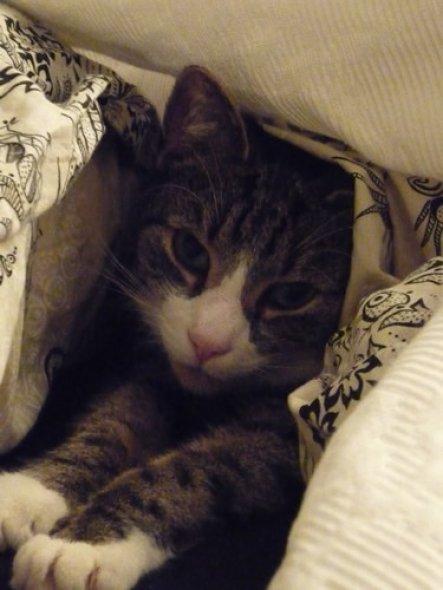 Er versteckt sich gern- besonders wenn der Staubsauger angeworfen wird :-)