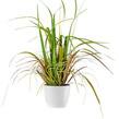 heine home Unisex Grasbusch grün