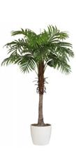 Home affaire Kunstpflanze �Arecapalme�, grün